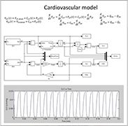 Quantitative Human Systems Physiology - Cardiovascular model