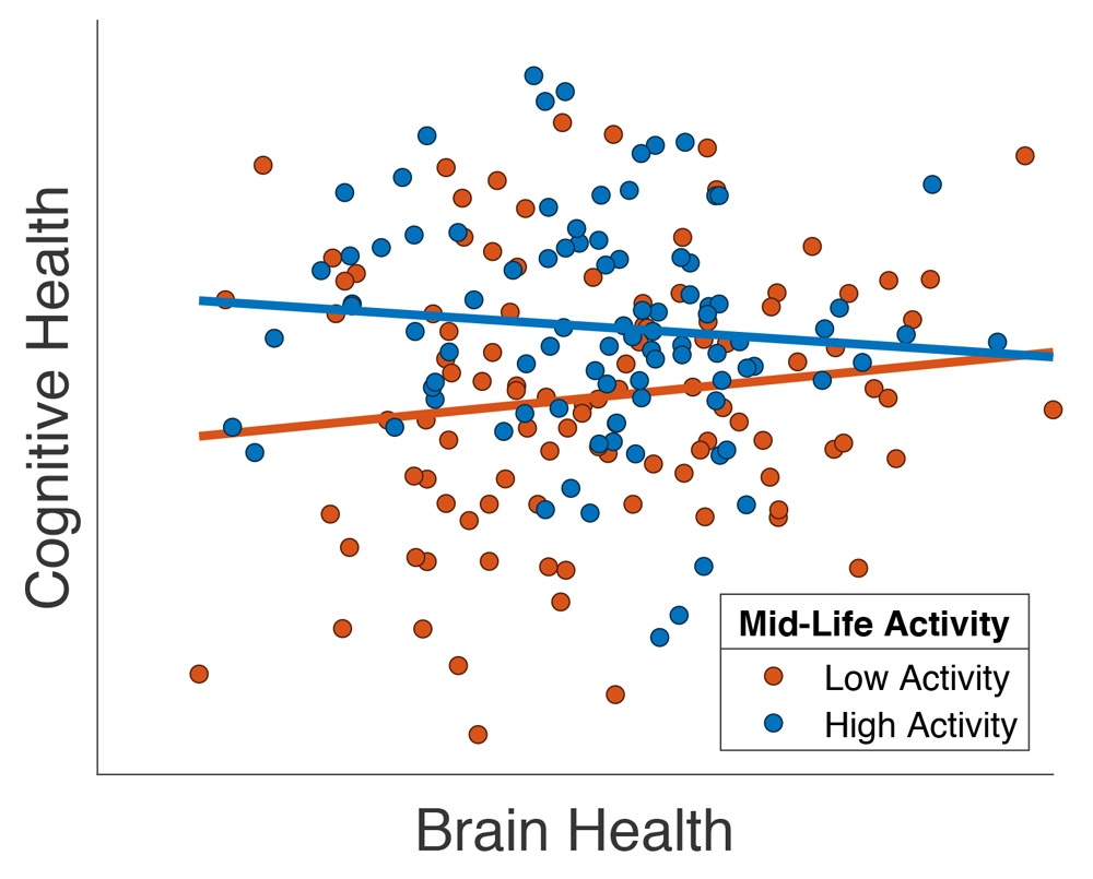 """Gráfica que muestra la relación entre la capacidad cognitiva y una medida estructural de imagen por resonancia magnética de la salud cerebral (""""volumen total de materia gris"""") en un subconjunto de participantes de Cam-CAN mayores de 65 años, adaptado de Chan et al. (2018). Cada participante es un punto, y el color del punto indica si ha participado en niveles altos (azul) o bajos (rojo) de actividad fuera del lugar de trabajo en la madurez."""