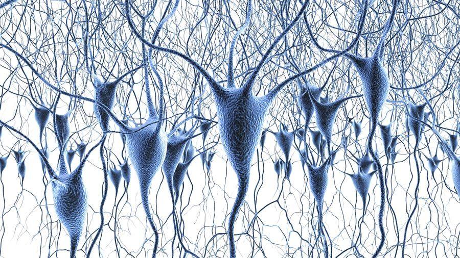 Neurociencia celular y de sistemas